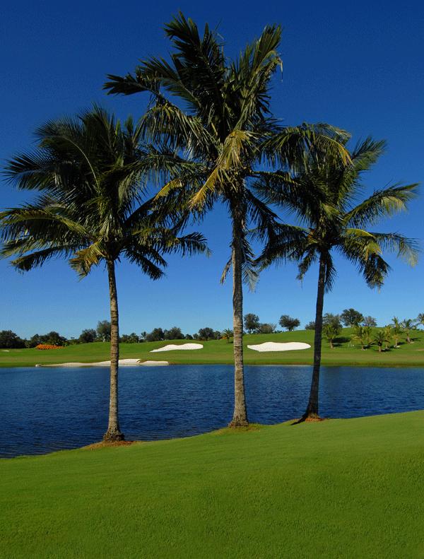 palmen-uberall