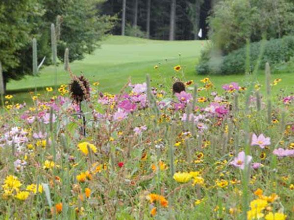 natur-golfen-fotocredit-green-magazin