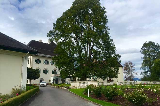 Golf spielen und Heiraten: Eine sagenumwobene Linde steht direkt vor dem Schloss. Im Sommer der perfekte Platz für Hochzeitsgesellschaften.