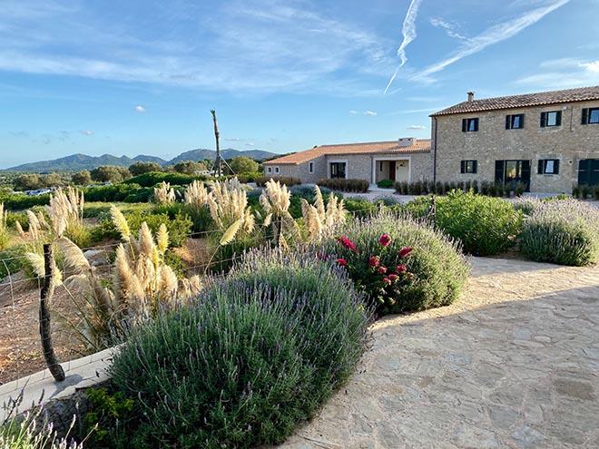 Überall duftet es nach Lavendel und Rosmarin. Ein lokaler Garten-Designer hat den mediterranen Garten angelegt. Fotocredit: Exklusiv Golfen