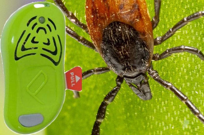 Dieser kleine Sender gegen Zecken begleitet Jäger oder Wanderer längst! Fotocredit Zecke: t3rmiit aud pixabay.com